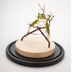 画像2: エマニエル・トッフォロ「Two Mantises」