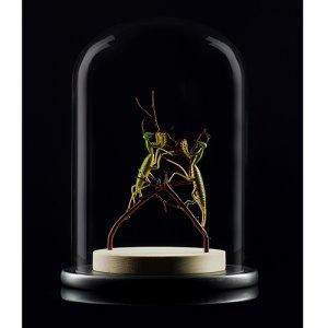 画像1: エマニエル・トッフォロ「Two Mantises」