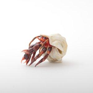 画像4: Vittorio Costantin 「Hermit crab」