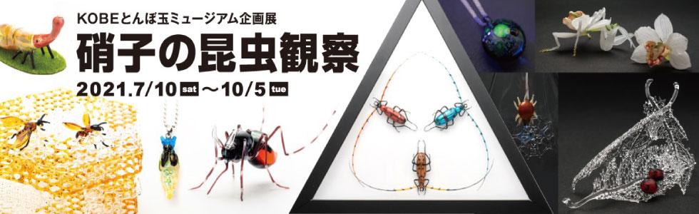 企画展 硝子の昆虫観察